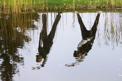 Exercices au-dessus de l'étang Photos stock