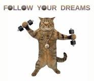 Exercices de chat avec des haltères photo libre de droits
