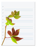 Exercise book with multicolor virginia creeper twig Royalty Free Stock Images