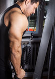 Exercise for triceps Stock Images