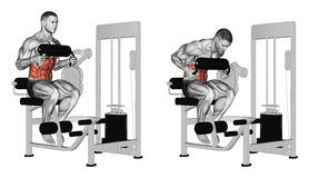 Exercising. Abdominal Crunch in AB machine. Abdominal Crunch in AB machine. Exercising for bodybuilding Target muscles are marked in red royalty free illustration