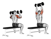 Exercising. Bench dumbbell sitting vector illustration
