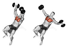 Exercising. Breeding dumbbells lying on an incline bench Royalty Free Stock Photo
