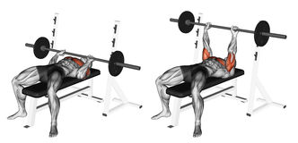Exercising. Close-Grip Barbell Bench Press. Close-Grip Barbell Bench Press. Target muscles are marked in red. Initial and final steps royalty free illustration