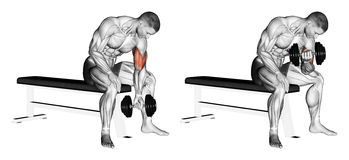 Exercising. Concentrated bending arms with a dumbb. Concentrated bending arms with a dumbbell. Exercising for bodybuilding. Target muscles are marked in red stock illustration