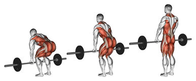 Exercising. Deadlifts with a barbell vector illustration