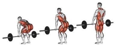exercising Deadlifts con un barbell ilustración del vector
