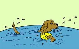 Exercising dog Stock Images