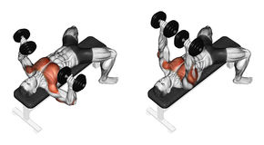 Free Exercising. Dumbbell Bench Press Lying. Second Emb Royalty Free Stock Photos - 43826108