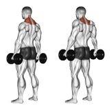 exercising Encogimientos de hombros con pesas de gimnasia libre illustration