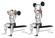 Exercising. Extension arms with curved barbell from behind the head Stock Images