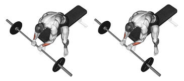 Exercising. Extension of the wrist with a barbell. Extension of the wrist with a barbell grip on top. Exercising for bodybuilding Target muscles are marked in Stock Images