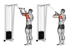 exercising Filas de Delt de la parte posterior de la cuerda del cable stock de ilustración