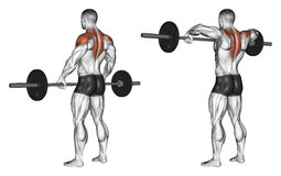 Exercising. Front shoulder broach with barbell. Front shoulder broach with barbell. Exercising for bodybuilding. Target muscles are marked in red. Initial and Royalty Free Stock Photos