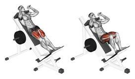 Free Exercising. Hack Squats Royalty Free Stock Photo - 57113935