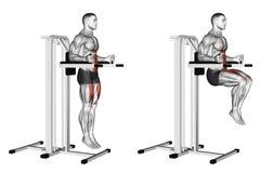 Exercising. Knee Raise on parallel bars royalty free illustration