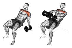 Exercising. Lifting arms with dumbbells on incline bench Royalty Free Stock Images