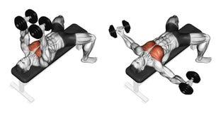 exercising Mentira de las pesas de gimnasia de la cría Fotos de archivo