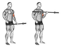 Exercising. One arm biceps curl with olympic bar. One arm biceps curl with olympic bar. Exercising for bodybuilding Target muscles are marked in red. Initial and royalty free illustration