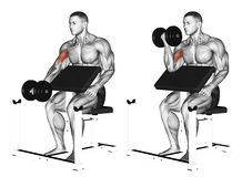 Exercising. One arm dumbbell preacher curl. One arm dumbbell preacher curl. Exercising for bodybuilding Target muscles are marked in red stock illustration