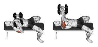 exercising Prensa de banco de la pesa de gimnasia que se acuesta con sus codos presionados ilustración del vector