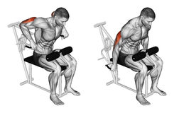 Exercising. Presses in simulator on triceps muscle. Presses in simulator on triceps muscle, lying on the bench. Exercising for bodybuilding. Target muscles are Royalty Free Stock Photo