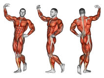 exercising Projectie van het menselijke lichaam apollo Stock Afbeeldingen