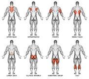 exercising Proyección trasera del cuerpo humano Imagen de archivo libre de regalías