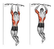 Exercising. Pull-ups on the brachialis stock illustration