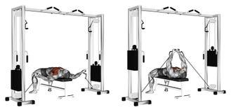exercising Reducción de los brazos para bajar el bloque libre illustration