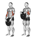 Exercising. Reverse plate curls Royalty Free Stock Images