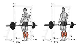 Exercising. Rise on toes with a barbell Stock Photo