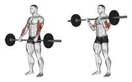 exercising Rizo con un apretón del barbell en el top libre illustration
