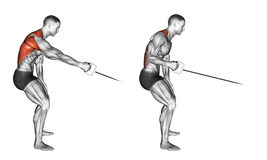 Exercising. Standing one arm cable row. Standing one arm cable row. Exercising for bodybuilding Target muscles are marked in red stock illustration