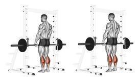 exercising Stijging op tenen met een barbell Stock Foto