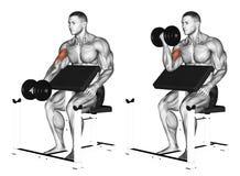 exercising Un rizo del predicador de la pesa de gimnasia del brazo stock de ilustración