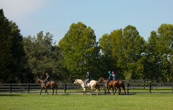 Exercising yearlings at a farm in northern florida Stock Photography