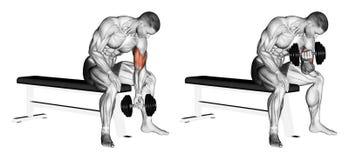 exercitar Braços de dobra concentrados com um peso ilustração stock