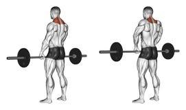 exercitar Encolhos de ombros com barbell Fotografia de Stock