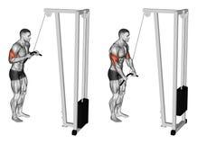 exercitar A extensão das mãos em um simulador do bloco muscles o bíceps e o tríceps Fotografia de Stock Royalty Free