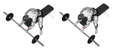 exercitar Flexão do pulso com um undergrip do barbell ilustração do vetor
