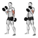 exercitar Onda com um martelo do aperto do peso ilustração do vetor