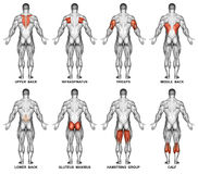 exercitar Projeção traseira do corpo humano Imagem de Stock Royalty Free