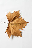 Exfoliate word printed on dead autumn leaf Stock Photography