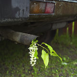 Exhaust Pipe And A Flower Royalty Free Stock Photography