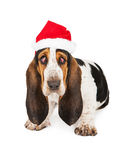 Exhausted Christmas Santa Dog. A tired young Basset Hound breed puppy dog with bloodshot droopy eyes wearing a Christmas Santa Claus hat stock photography