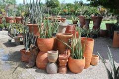 Exhibición artística de los potes de la terracota y de las plantas suculentas Fotos de archivo libres de regalías