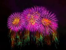 Exhibición coloreada de los fuegos artificiales en fondo oscuro del cielo Imagen de archivo