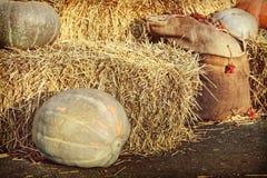 Exhibición de la acción de gracias de calabazas y de pilas grandes del heno Foto de archivo