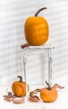 Exhibición de la calabaza de la acción de gracias Imagen de archivo